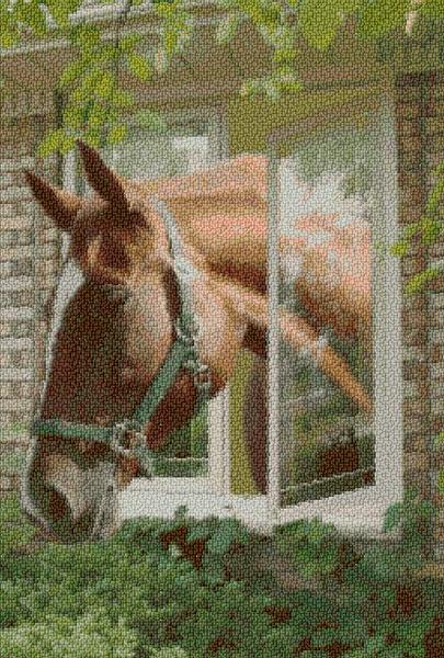Horse in the Window - Kit