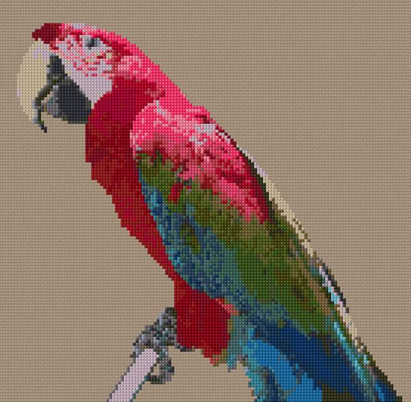 Maccaw Parrot