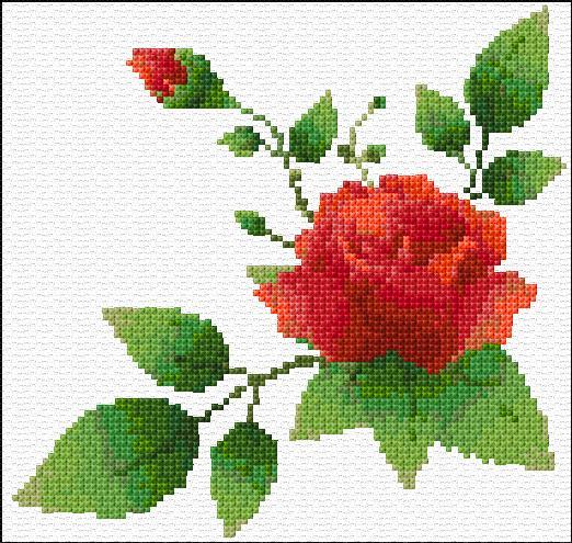 бродерия с рози