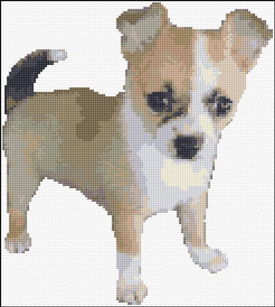 Short Haired Sable Chihuahua Puppy